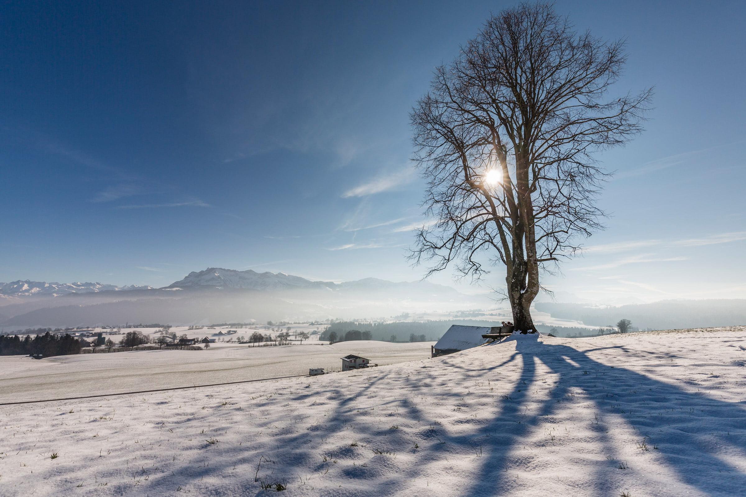 Die Höhe Huob wird weitherum durch eine stattlichen Baum gekennzeichnet