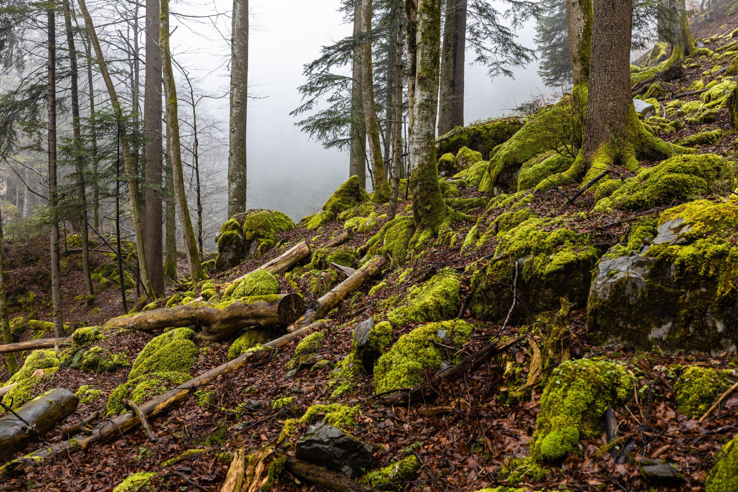 Mooslandschaft Engelbergtal